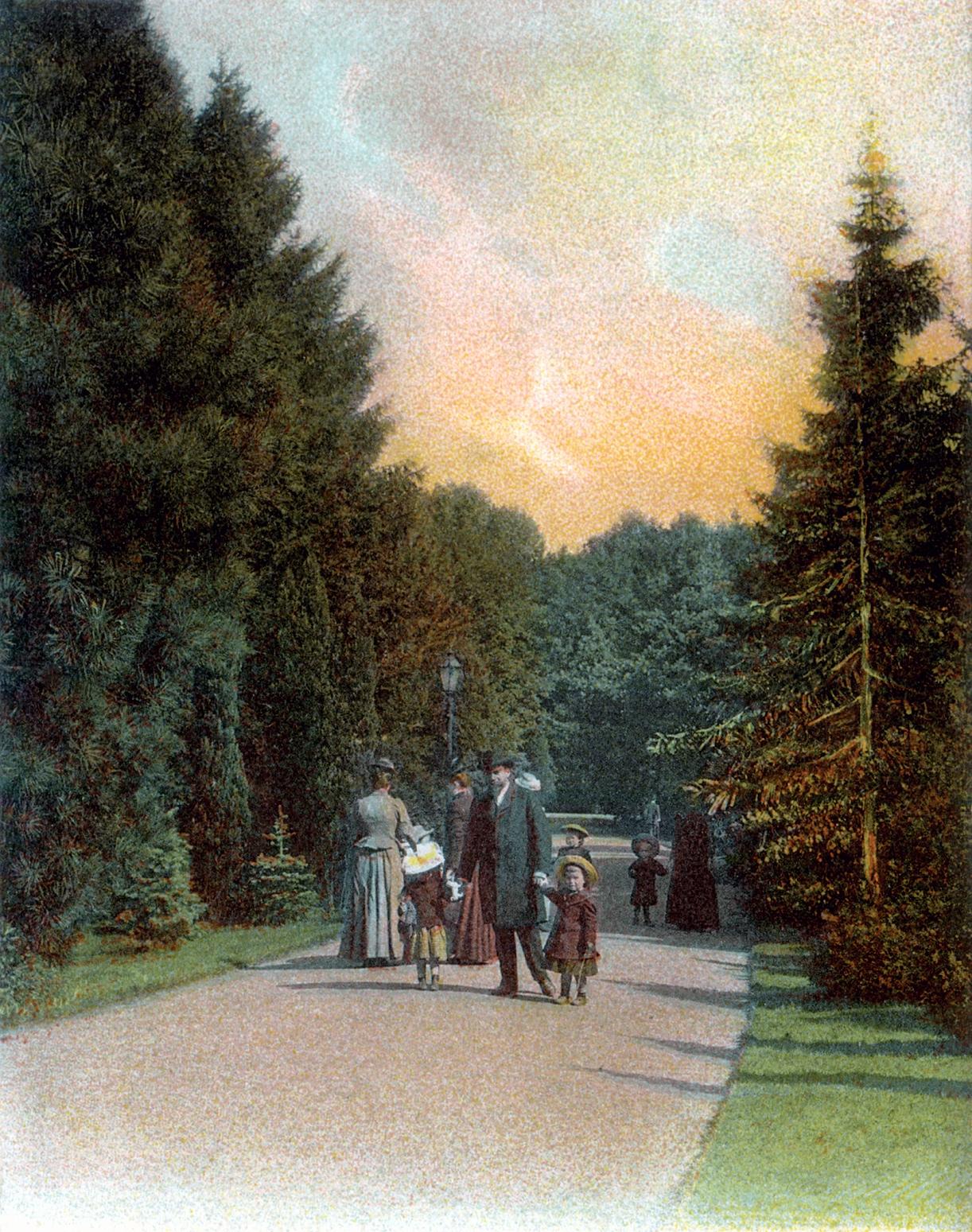 Nr.157 - Spaziergang im Tannenhain