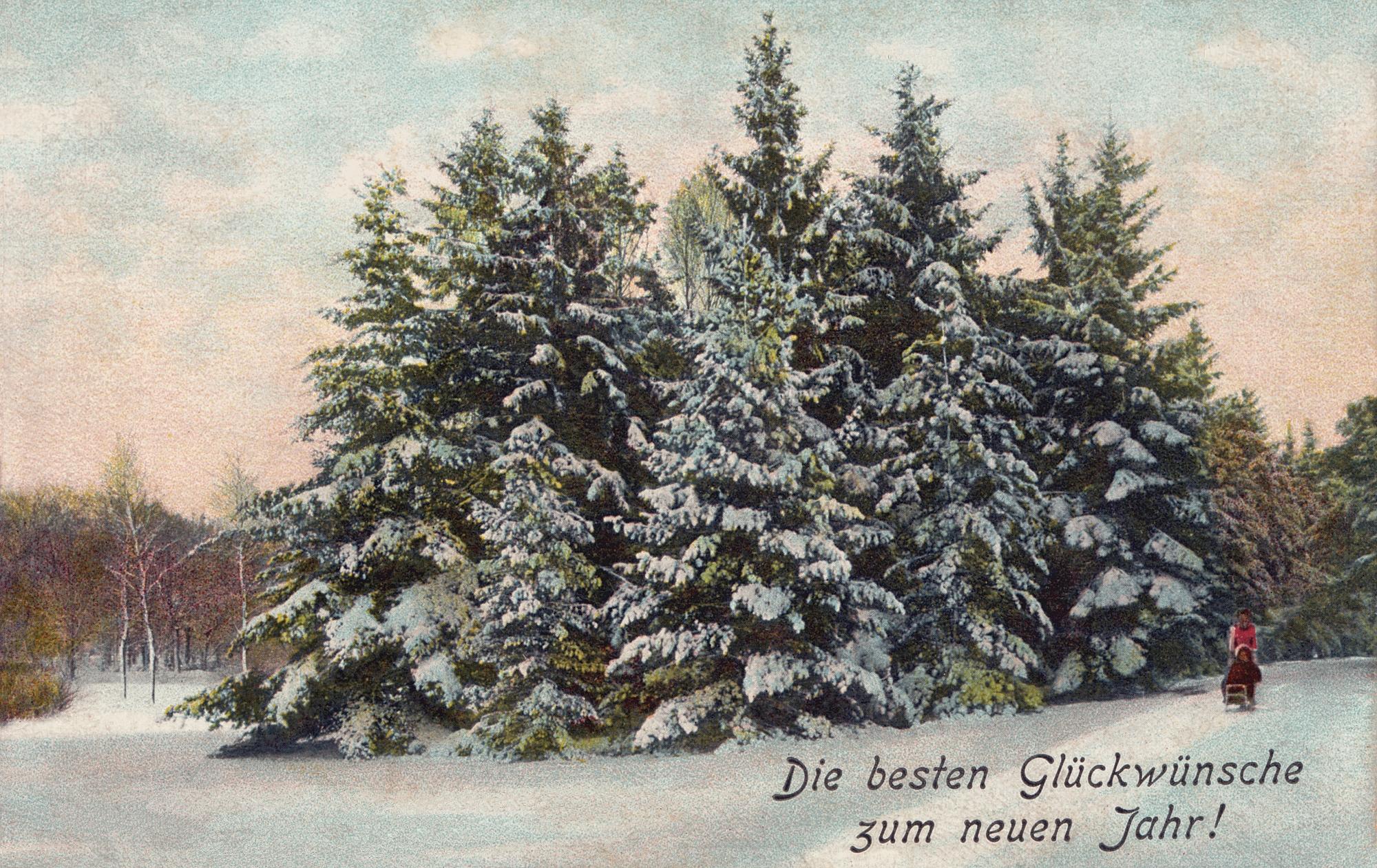 Nr.444 - Tannenpartie im Winter, Schlitten