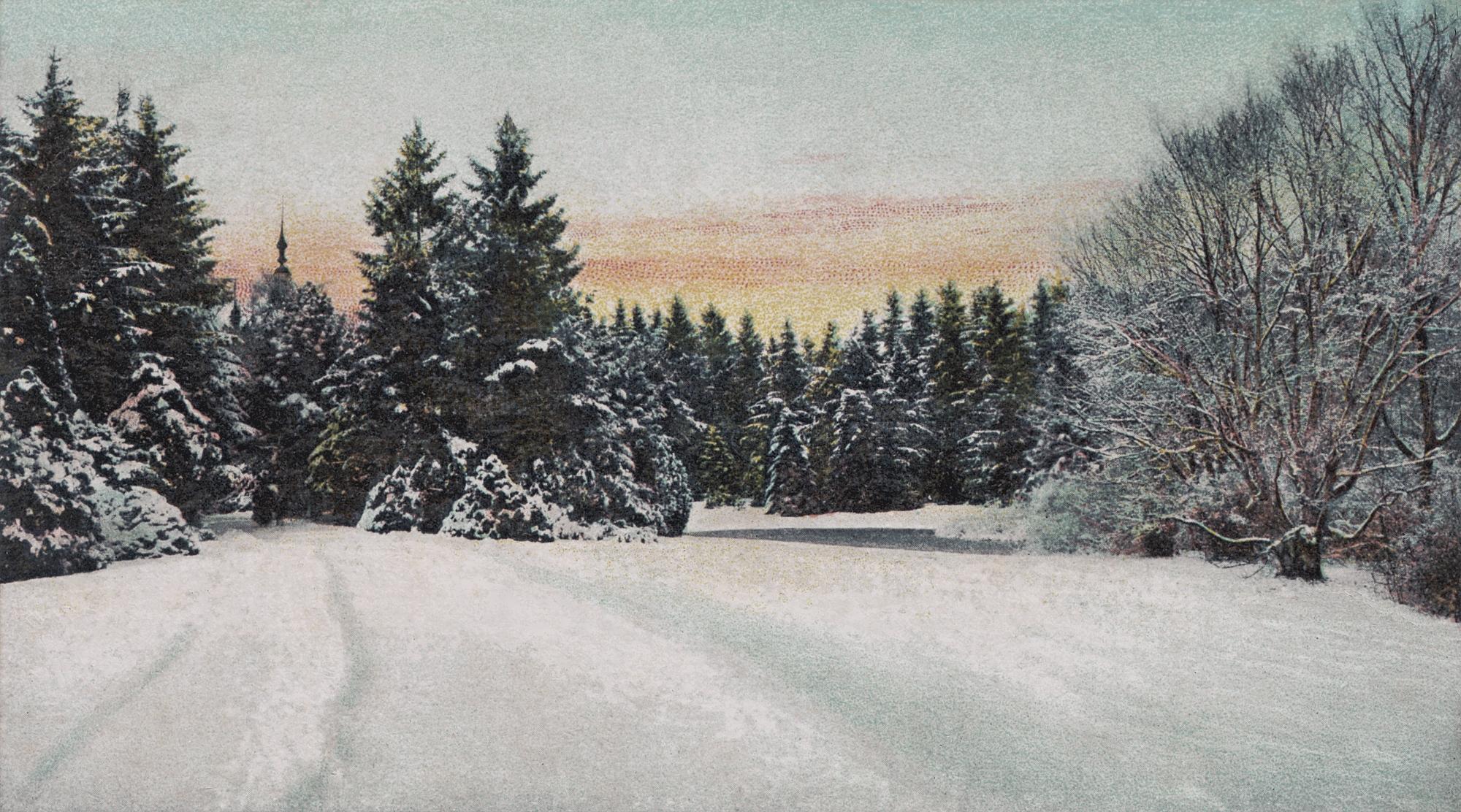 Nr.458 - Blick zum Parkhaus durch Tannen im Winter mit Schnee